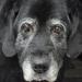 Thumbnail for Celebrating Deaf Dog Awareness Week